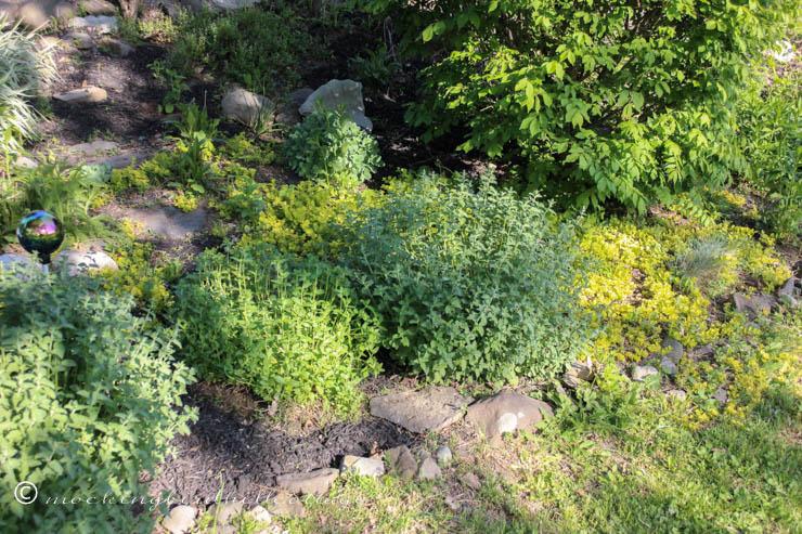 5-15 garden ground cover
