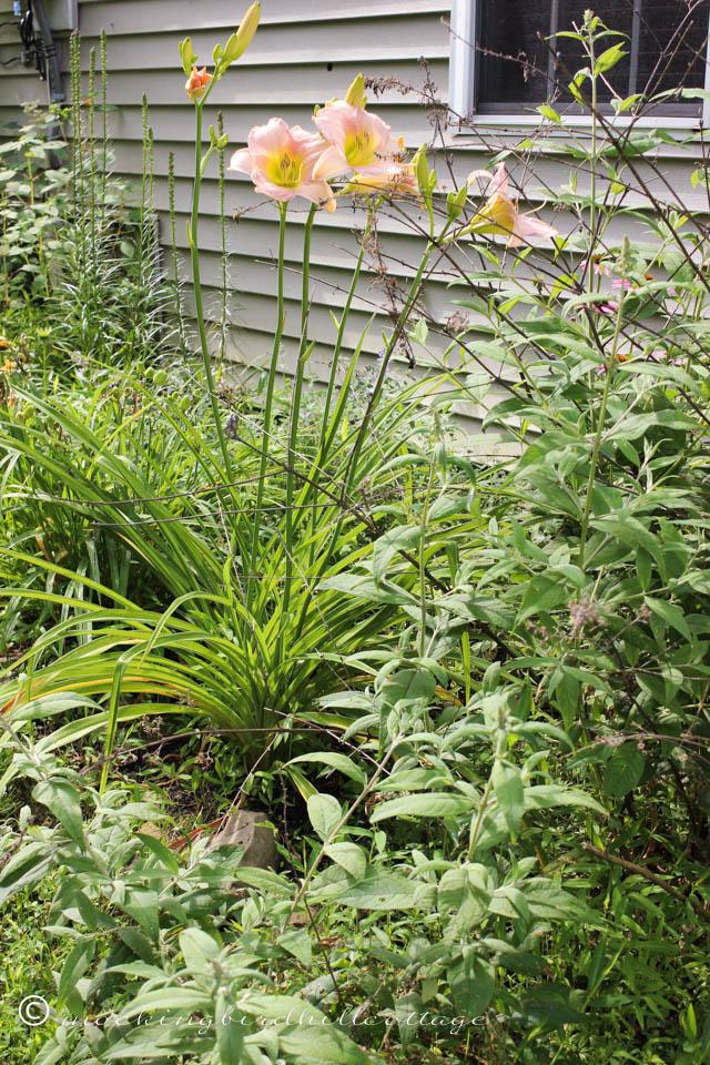 7-20 side garden