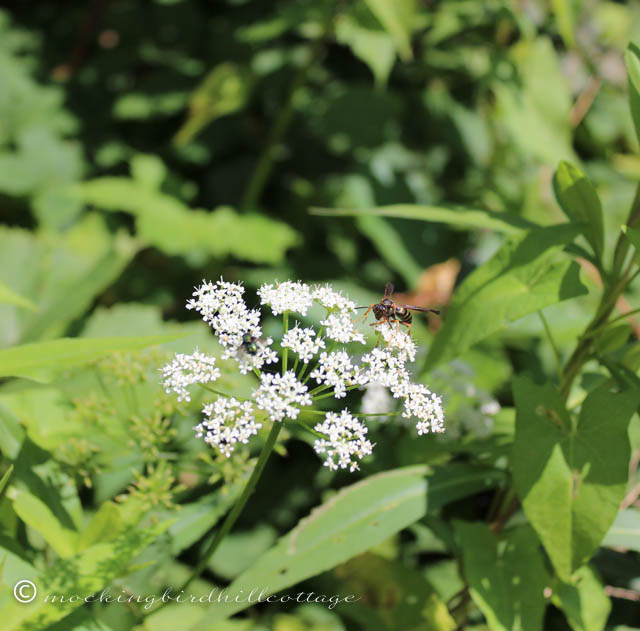 7-3 flower & bee