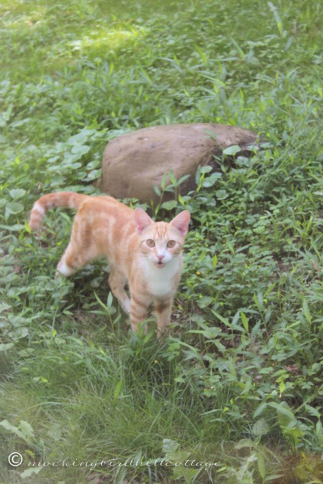7-30 cat2