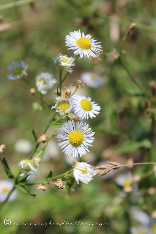 8-16 wildflower 2