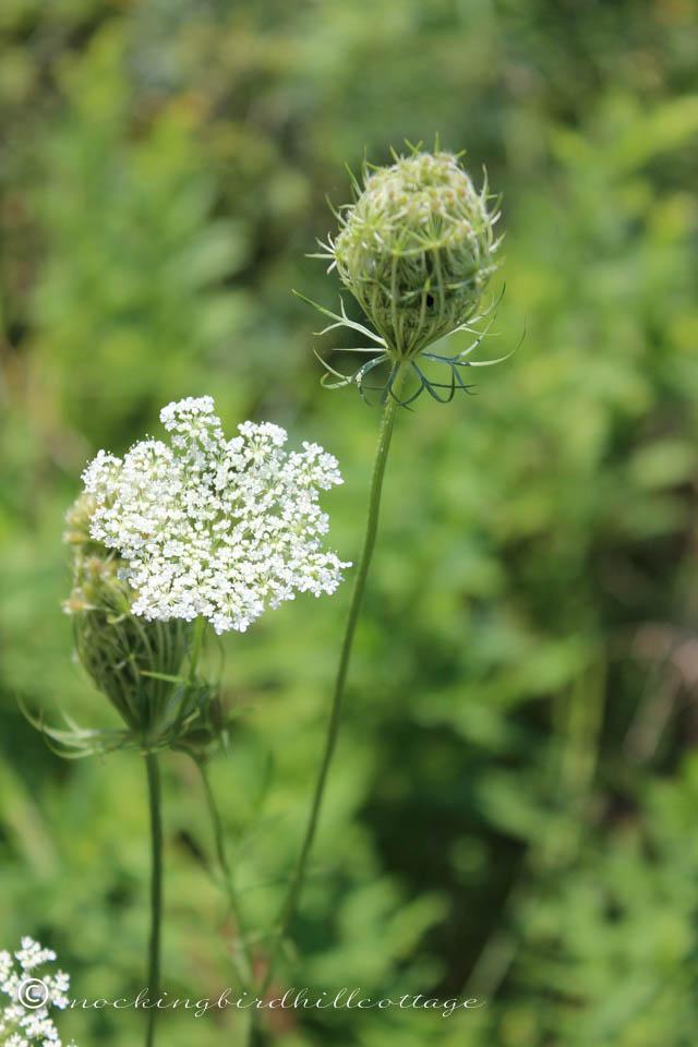 8-16 wildflower 3