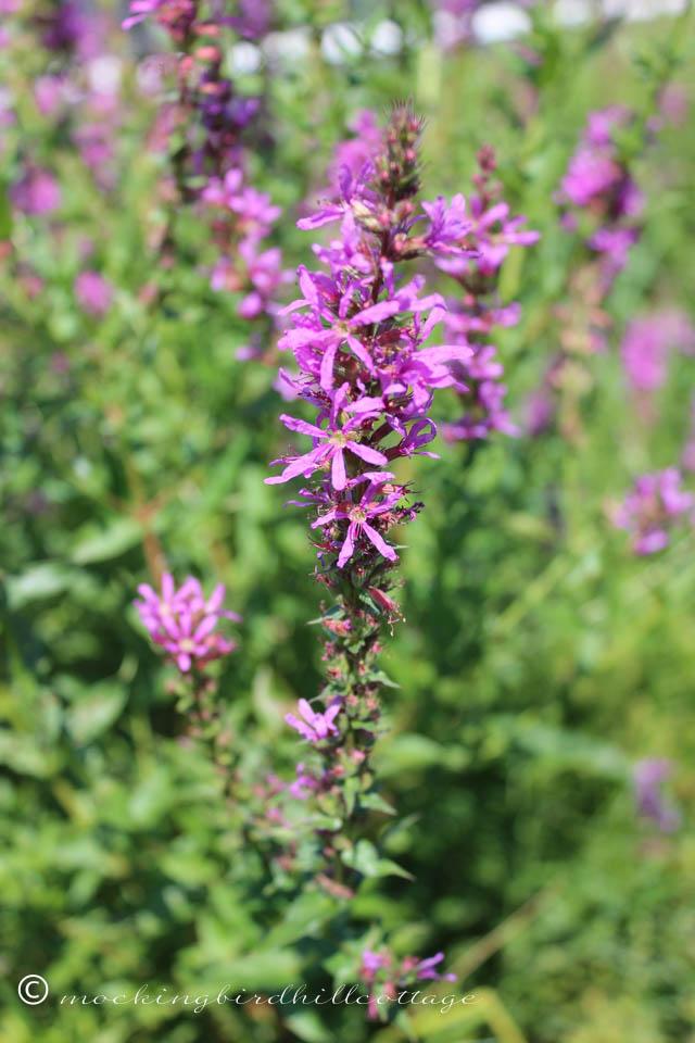 8-16 wildflower 4