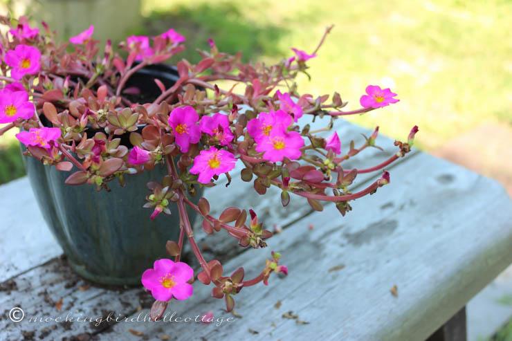 8-18 flowers