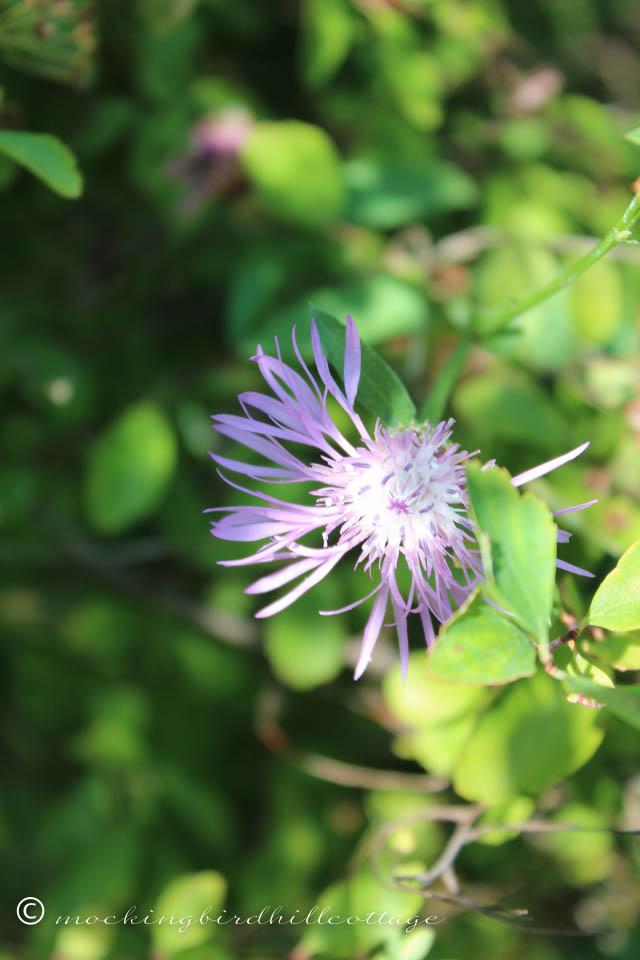 8-19 flower