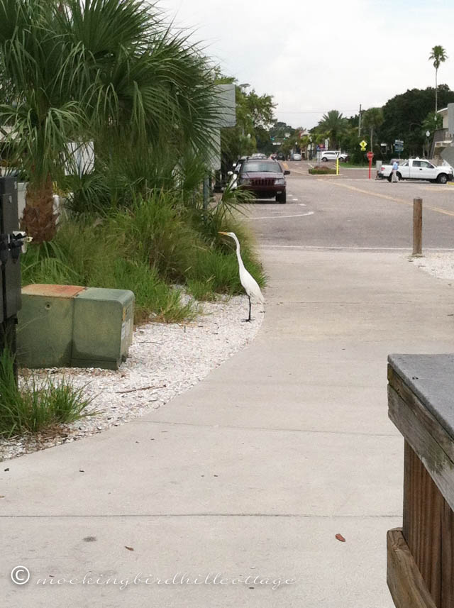 8-22 egret