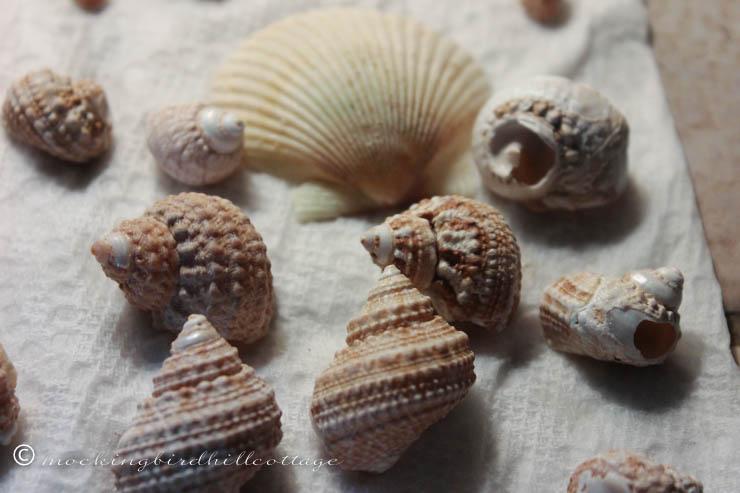 8-29 shells