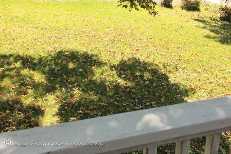 9-25 leaves