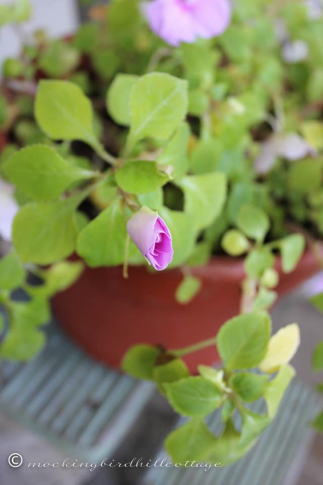 9-25 pinkbud