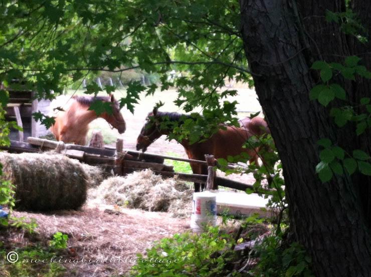 9-29 horses