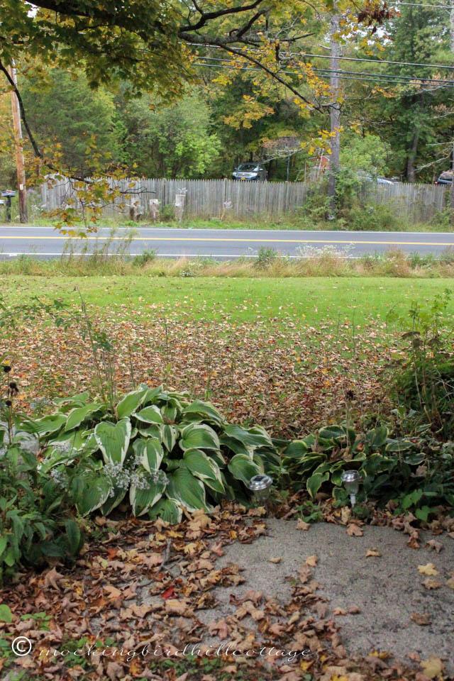 10-12 leaves
