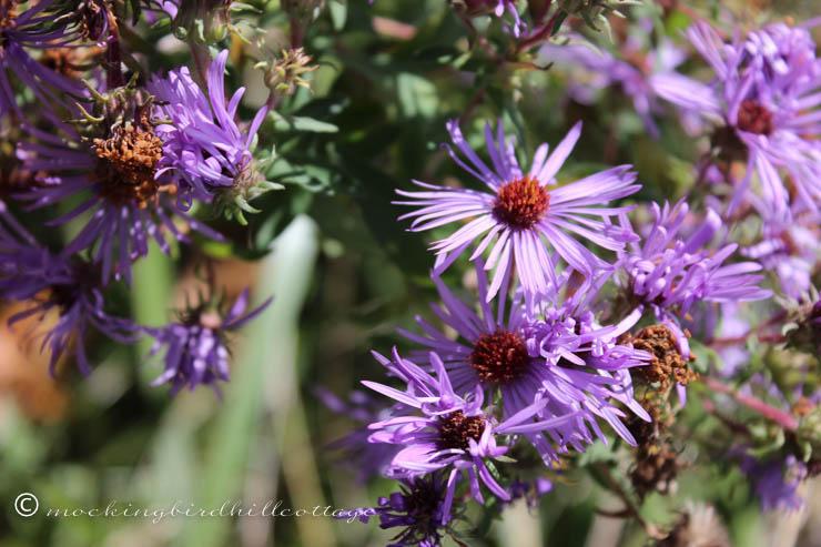10-17 wildflowers