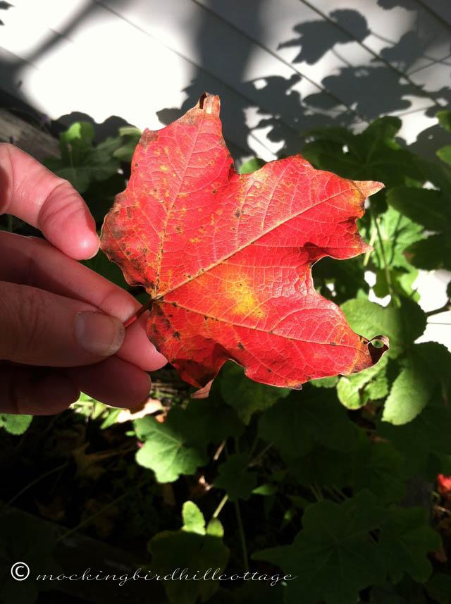 10-21 red leaf