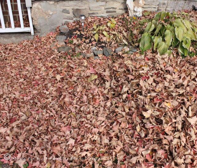 10-22 leaves