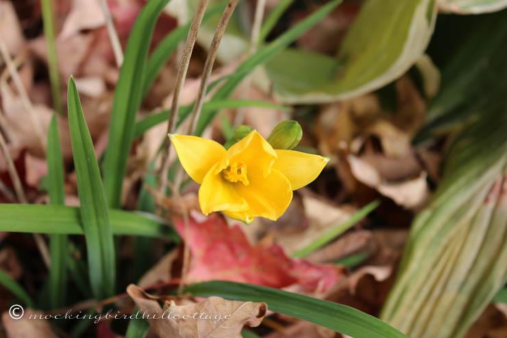 10-22 tiny yellow flower 2