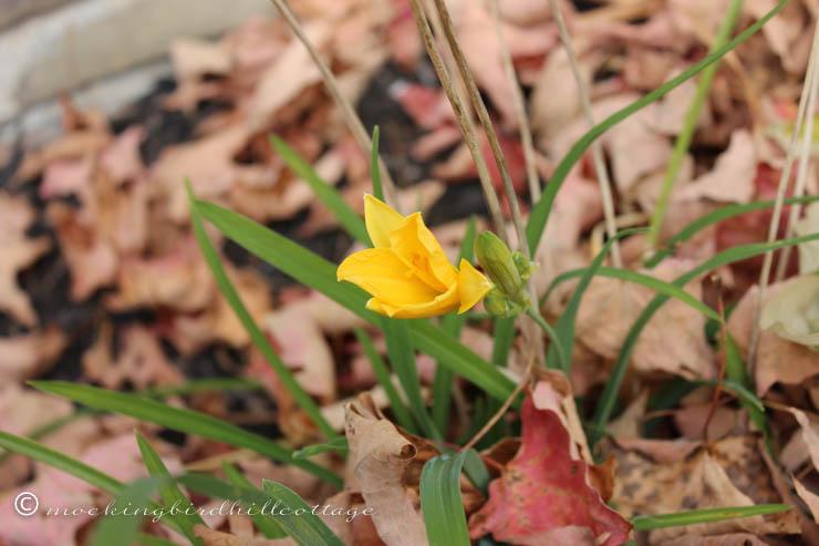 10-22 tiny yellow flower 3