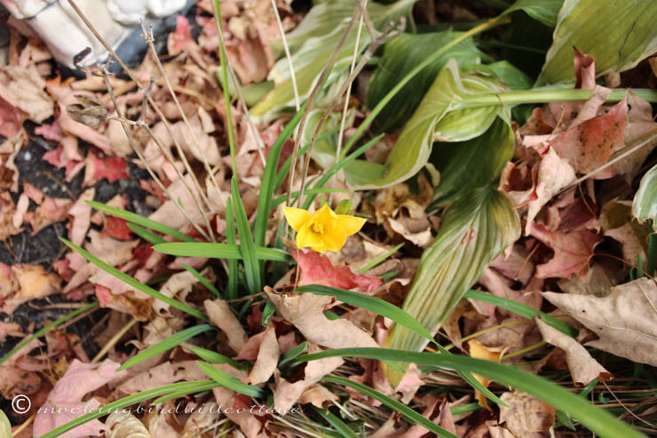 10-22 tiny yellow flower