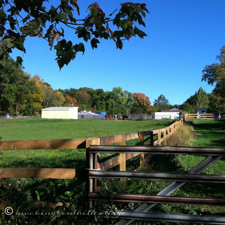 10-23 horsesinthedistance