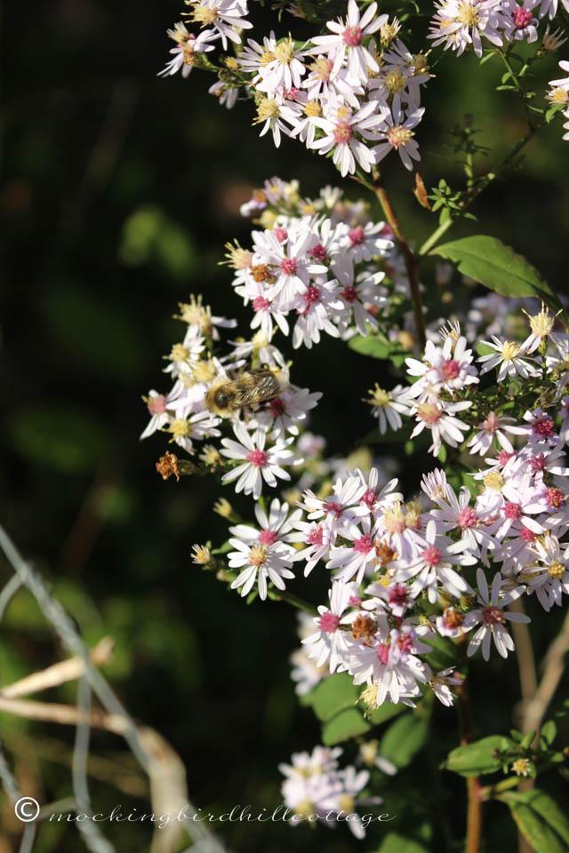 10-8 wildflowers&bee