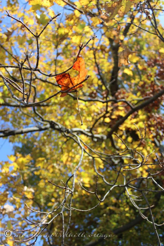 10-9 leaf caught in tree