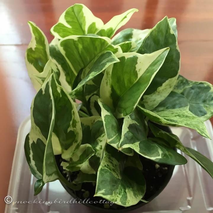 1-27 plant