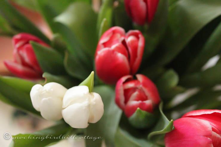3-29 tulips1
