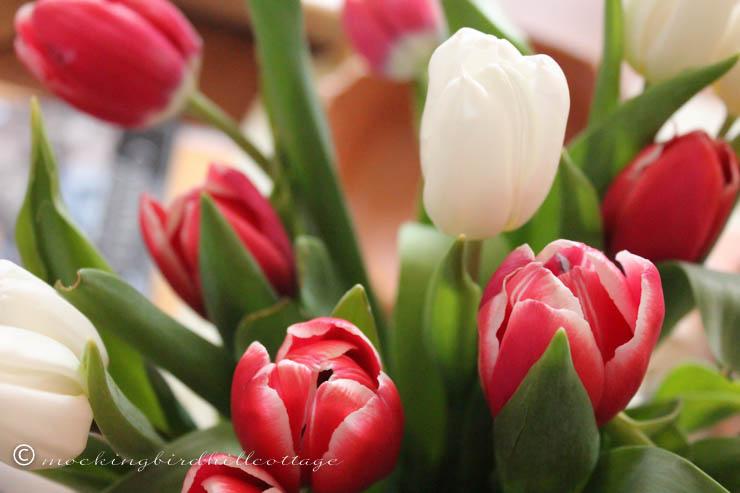 3-29 tulips2