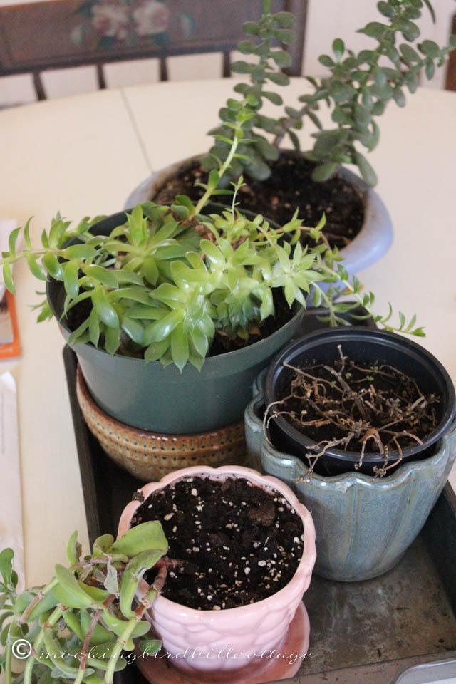 4-15 succulents
