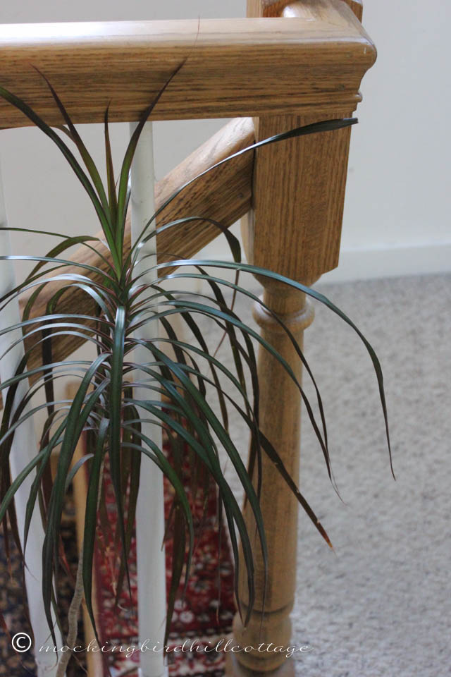 4-21 hallplant