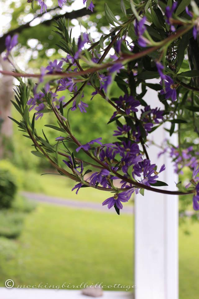 5-25 hangingplant