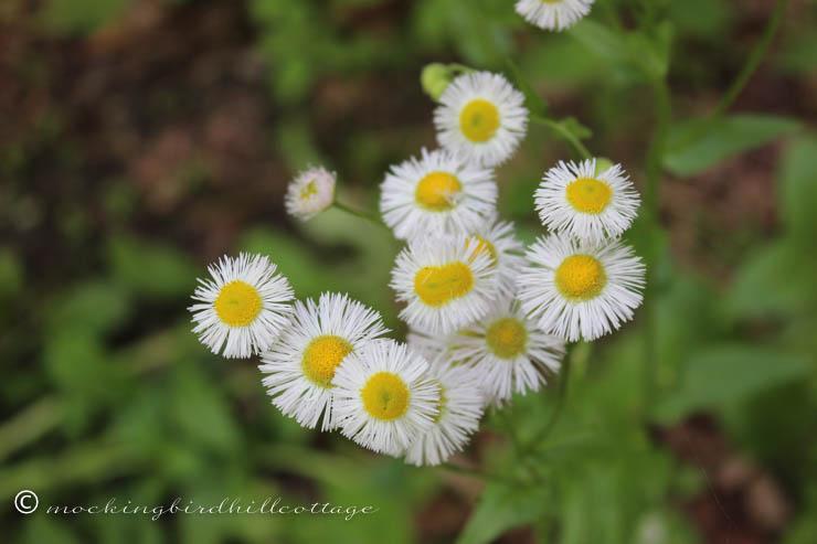 5-31 wildflowers