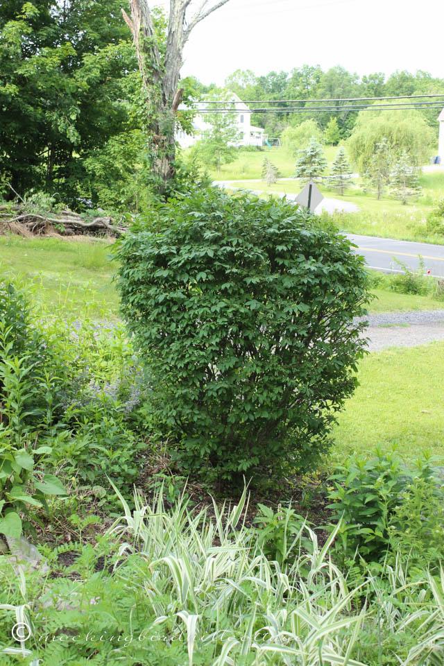 6-11 bush