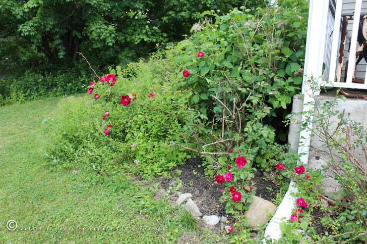 6-7 redroses