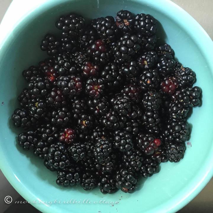 7-16 bowlfulofberries