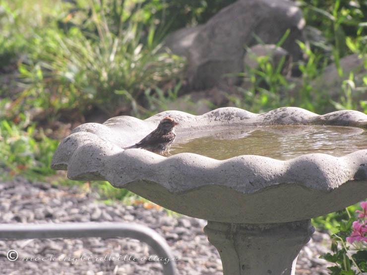7-19 finchinbirdbath