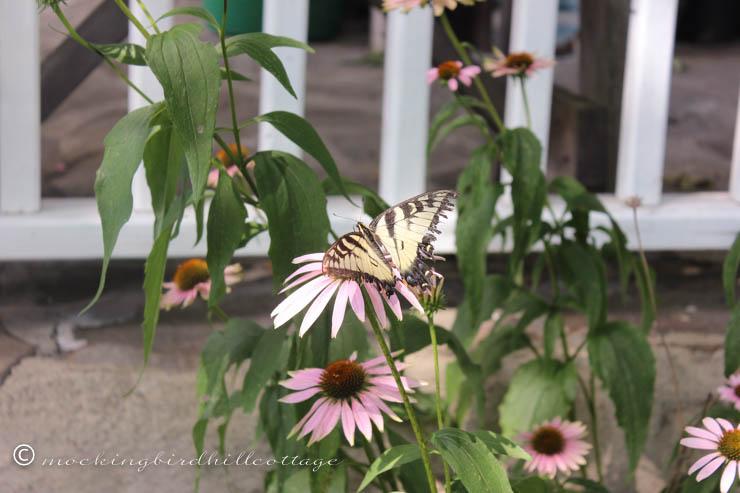 7-28 butterfly1