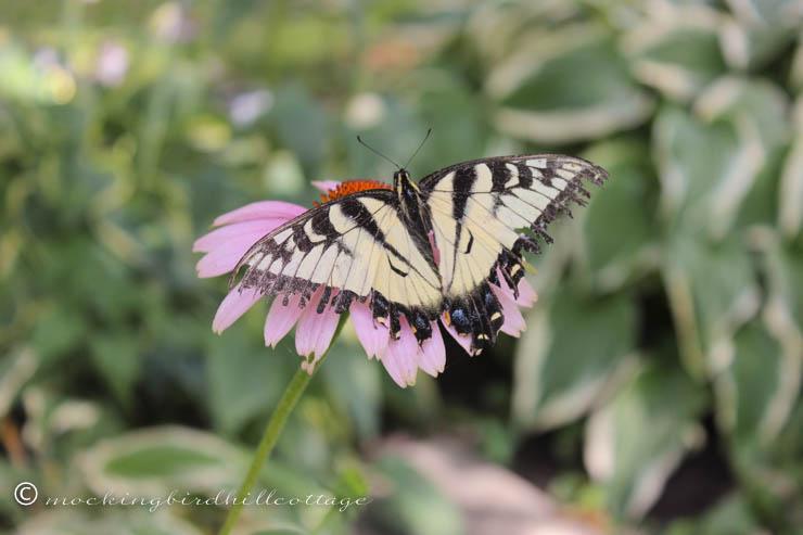 7-28 butterfly2