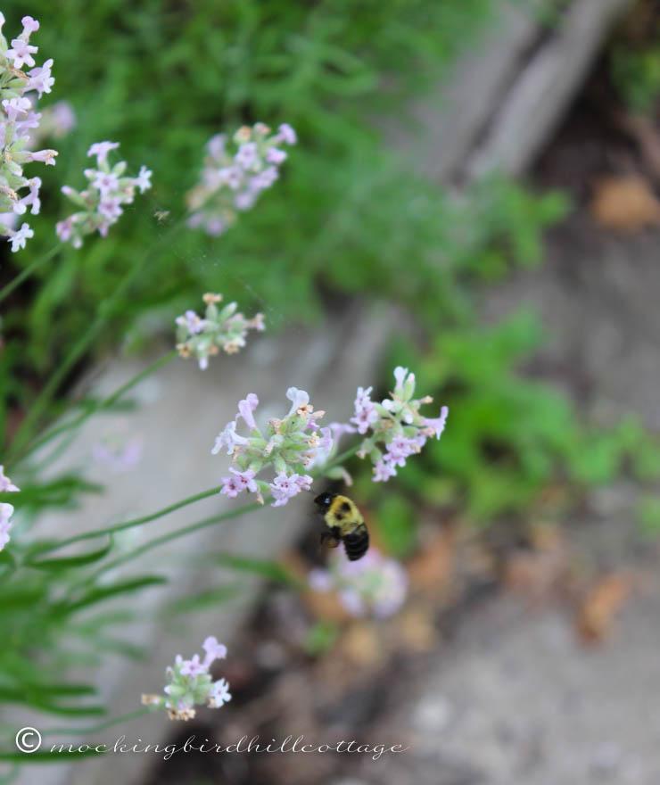 7-3 bumblebee2