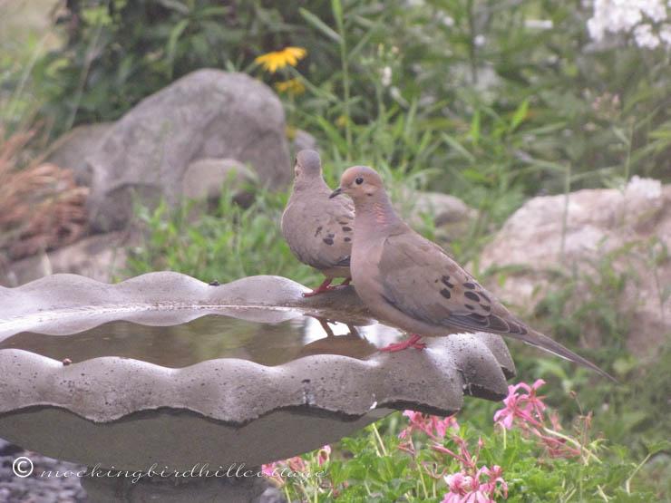7-31 dovepairbirdbath