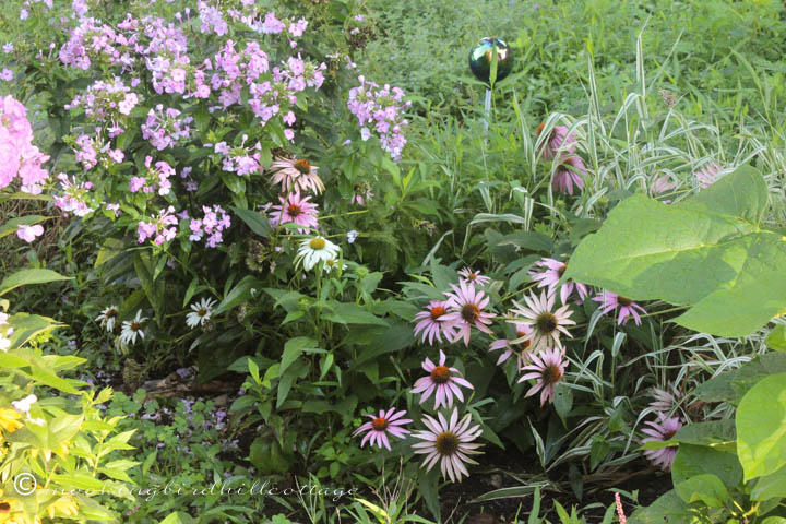 8-12 garden