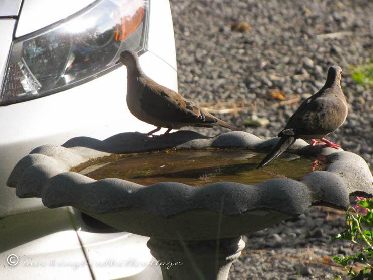 8-31 doves