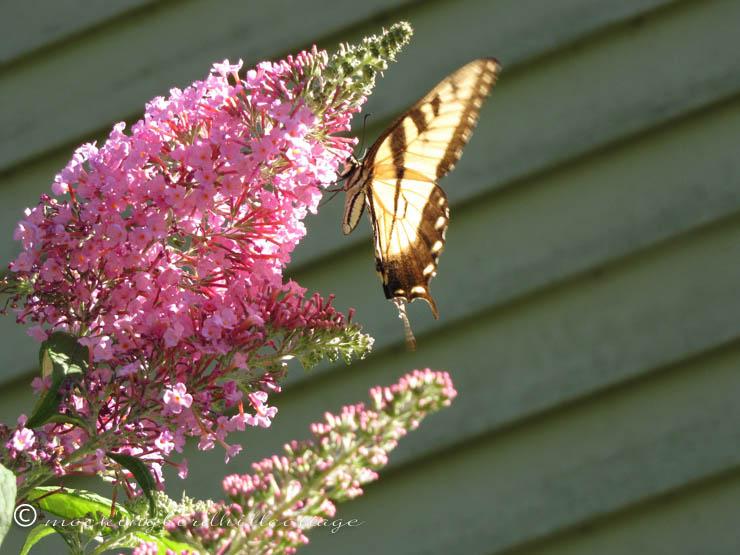 8-9 butterfly1