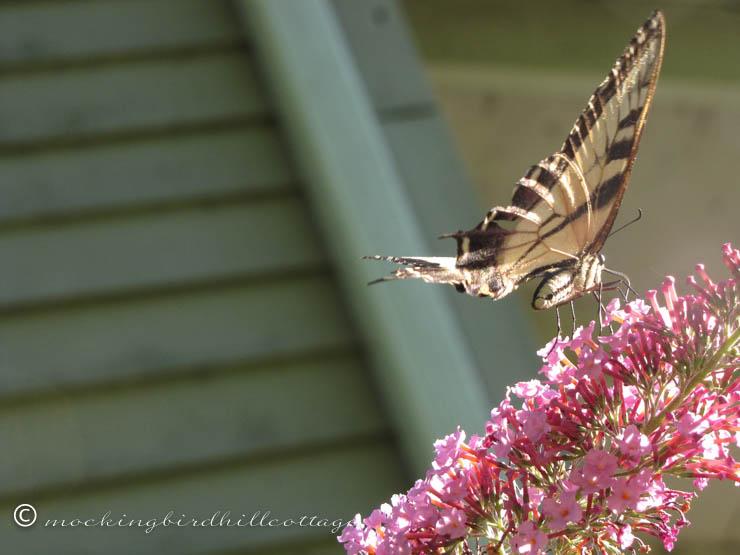 8-9 butterfly3