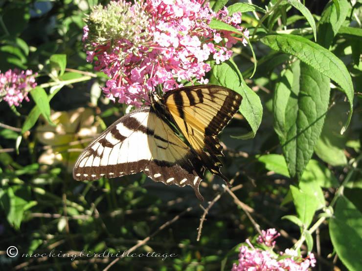 8-9 butterfly5