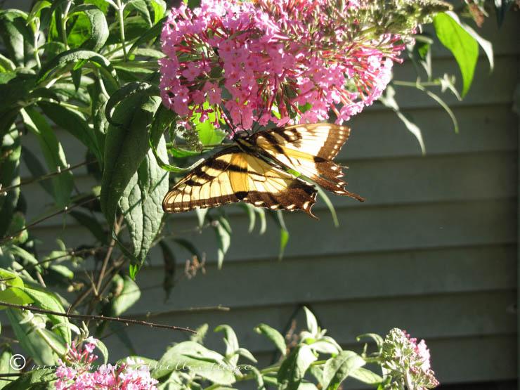 8-9 butterfly6