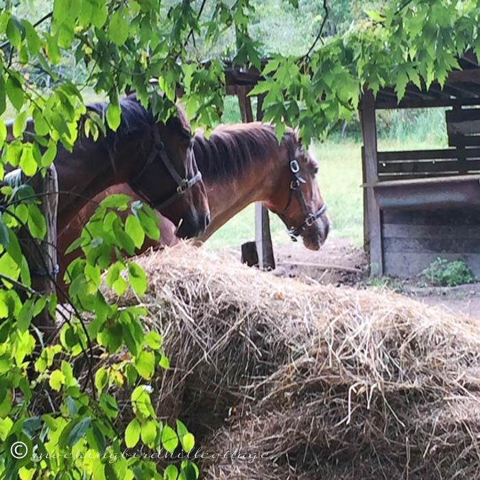 9-18-horses