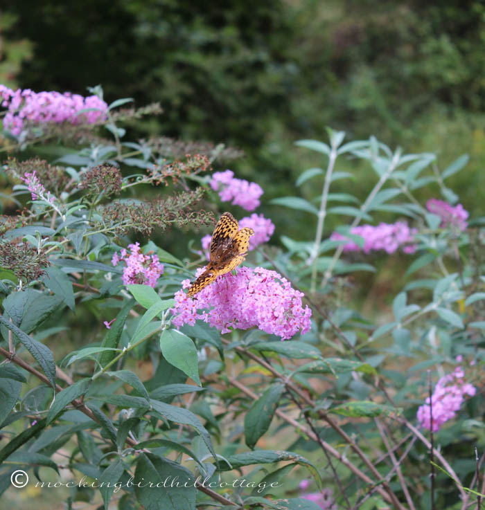 9-20-butterfly1