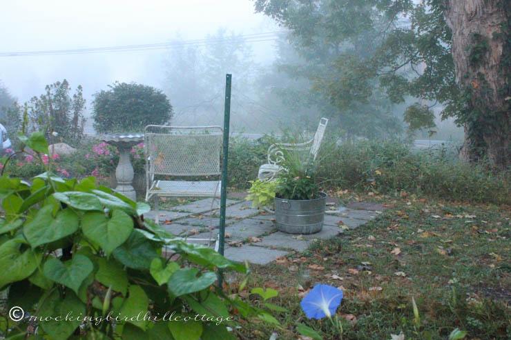 9-21-foggymorningglory