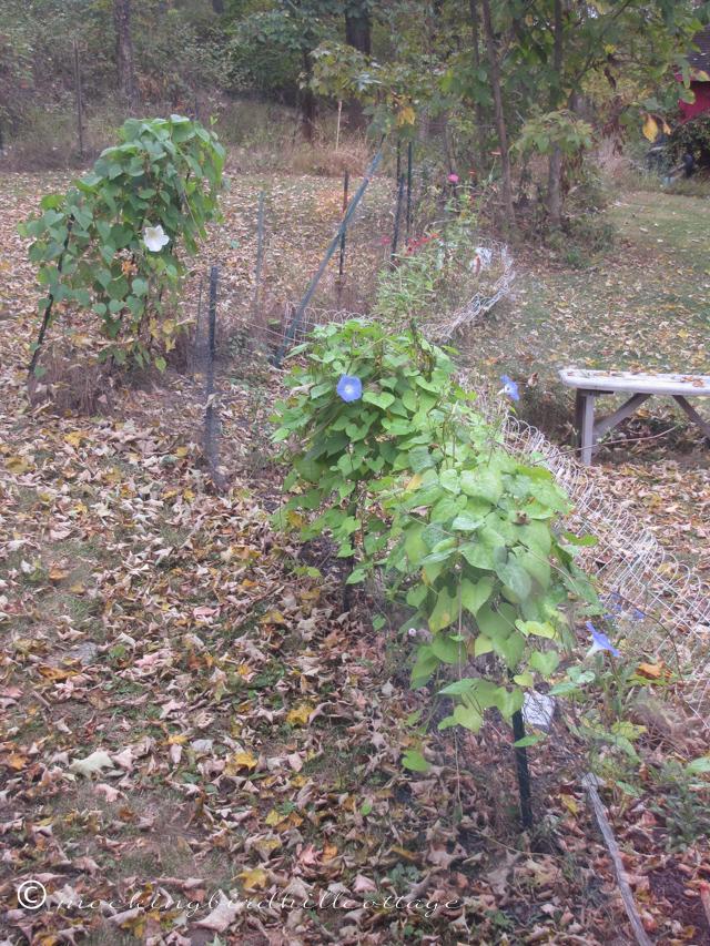 10-1-leaves1