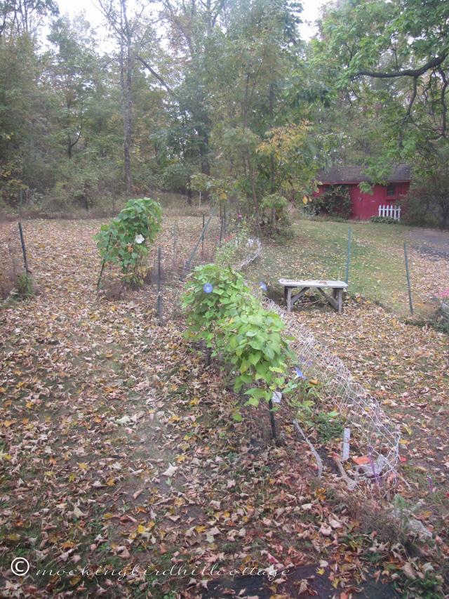 10-1-leaves2